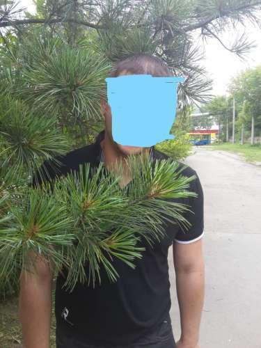 Oleg (36 gadi) (Foto!) vēlas sado-mazo iepazīšanās (Sludinājums Nr.5351501)